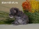 Giperboreya Zenon