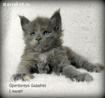 Giperboreya Galadriel