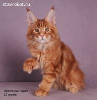 Giperboreya Hagard