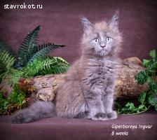 GIPERBOREYA Ingvar